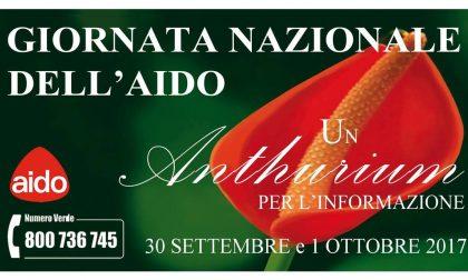 Giornata nazionale Aido, un Anthurium in piazza