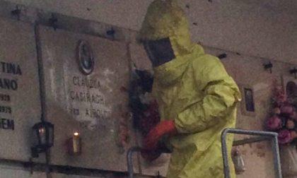 Pompieri al lavoro per rimuovere un nido di calabroni al cimitero
