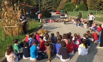 Asilo Primavera taglio del grano con Nonno Ettore VIDEO