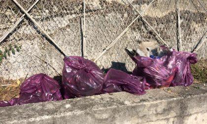 La Protezione Civile civatese ripulisce la Provinciale e la ss36