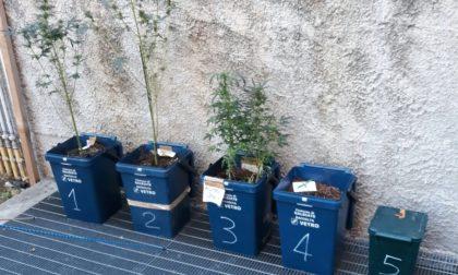 Polizia Locale soccorre un 43enne e trova sei piante di marijuana