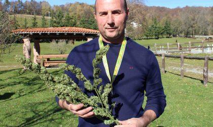 Coldiretti Lecco Como promuove la coltivazione della canapa
