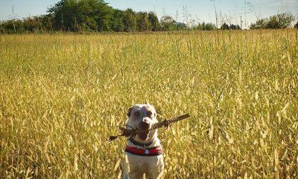 Cani avvelenati nei boschi, parla un proprietario
