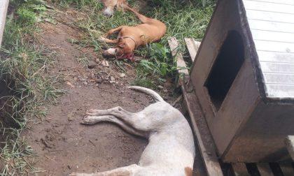 Cani ammazzati, Enpa sporge denuncia
