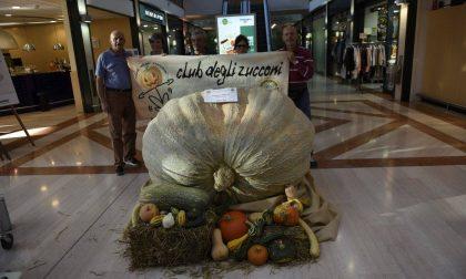 La zucca gigante del Team Petrelli esposta al centro commerciale FOTO