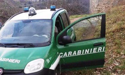 Cani avvelenati, ora indagano i Carabinieri Forestali