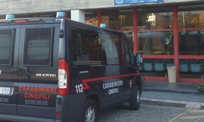 Cani antidroga alle scuole di via Lodovichi