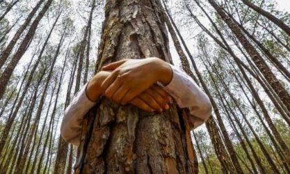 Tante iniziative per la settimana dell'ambiente