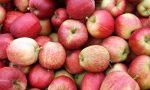 Le mille mele del Parini