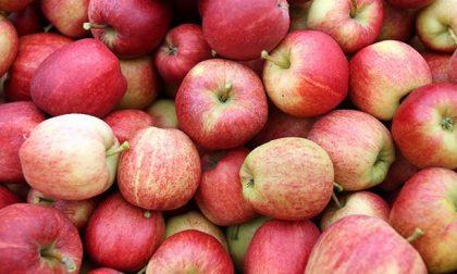 Perché a San Nicolò si regalano le mele?