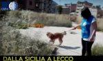 Viaggio della speranza cagnolino salvato a Lecco VIDEO