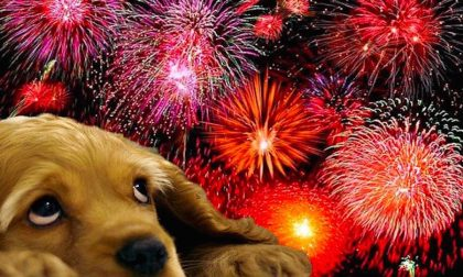 Capodanno da cani, ecco come comportarsi per tutelare gli animali