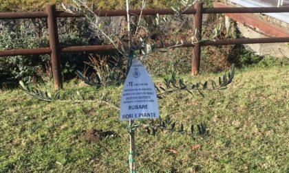 Ladri senza scrupoli rubano anche gli alberi dei bambini