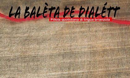 Dialetto brianzolo: brasc, brascinn, brascieu e brasc de mercant