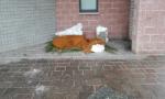 Vandalismi a Paderno: interviene il sindaco FOTO