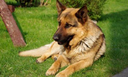 Spara al cane del vicino rimedia una denuncia
