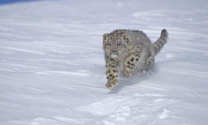 Dal Wwf Lecco 6mila euro per le specie protette
