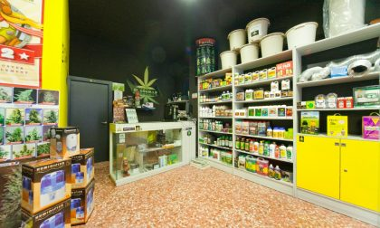 Negozi cannabis boom in Lombardia: a Lecco due growshop