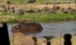 Il racconto choc di Luisella, azzannata da un ippopotamo. Ecco la sua FOTO