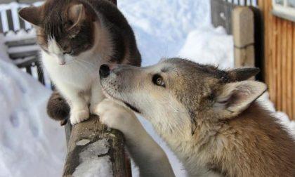 Come proteggere gli animali dal freddo e dal temuto Buran o Burian…