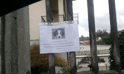 Cane avvelenato al Lazzaretto di Oggiono