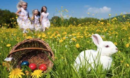 Pasqua in agriturismo   nel Lecchese ce ne sono più di 70