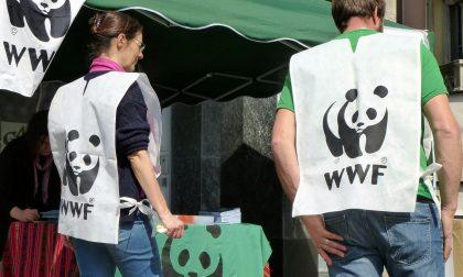 Earth Hour: WWF Lecco invita all'adesione i Comuni  del Lecchese