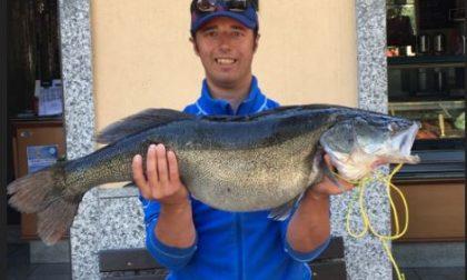 Pesca un luccio perca da 8,5 kg