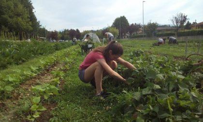 Nuovo bando targato Living Land: otto giovani meratesi potranno dedicarsi all'agricoltura