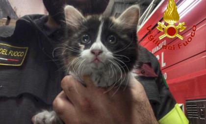 Vigili del Fuoco dal cuore tenero salvano un gattino FOTO