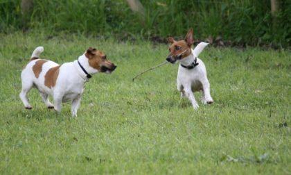 Tolleranza zero contro le deiezioni canine, scende in campo anche il sindaco