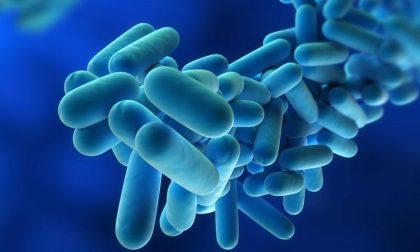 Legionella in Lombardia, 16 casi e una vittima