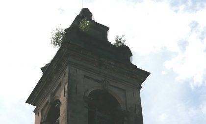 Calolziocorte, alberi sul campanile della chiesa di San Martino Vescovo FOTO
