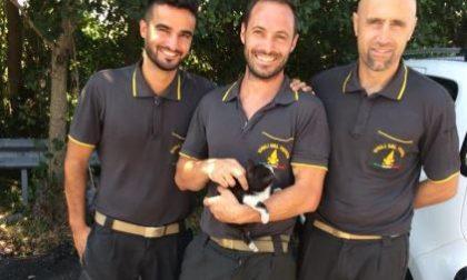 Gattino incastrato nel motore salvato dai pompieri FOTO