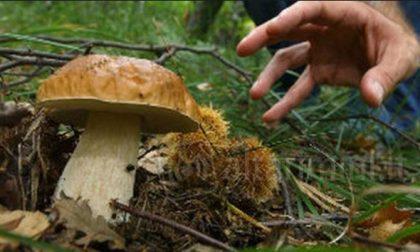 E' iniziata la stagione dei funghi: ecco dove farli controllare nel Lecchese