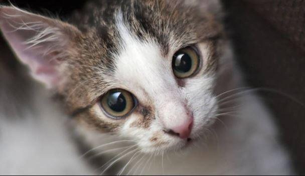Seviziati e ammazzati lecchese indagata per uccisione di - Cucina casalinga per gatti ...