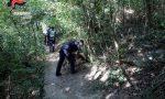 Bosco della droga: nuovo blitz dei Carabinieri coi cani