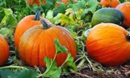 Nel Lecchese halloween arriva in anticipo! FOTO