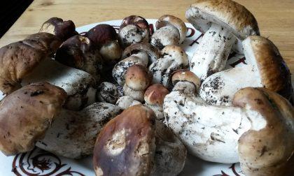 Sapori d'autunno a Teglio, ora tocca ai funghi