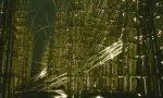 Vento e trombe d'aria in Lombardia: crolla la Cattedrale vegetale