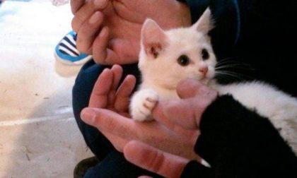 Denunciata la killer di gatti di Lecco