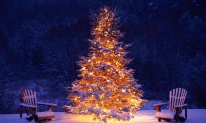 Oggi, secondo la tradizione si addobba l'albero di Natale: appello per sceglierne uno a km 0