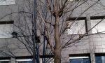Luminarie libere, ma non sugli alberi di Lecco: la provocazione del Comitato AlberiAmo