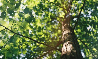 Cura del verde, 26 alberi saranno piantati in città