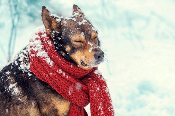 Arriva il gelo: ecco come proteggere gli animali dal freddo