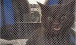 """""""Miracolo"""" di Natale: dopo 4 giorni trovata una gattina nel cofano di un'auto"""