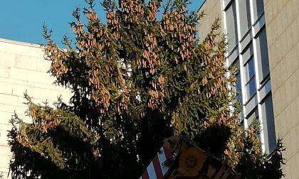 Luminarie natalizie: domani sera  si accende l'albero in centro Lecco