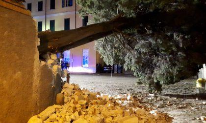 Cade cipresso sulla piazza, travolte due persone alla Pesa Vegia FOTO