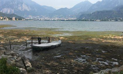Alghe nel lago di Garlate: pronta un'iniziativa per risolvere il problema