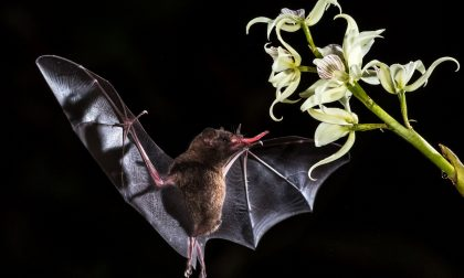 Laboratorio creativo a tema… pipistrelli
